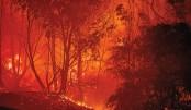 4 die in Cyprus' worst forest fire in decades