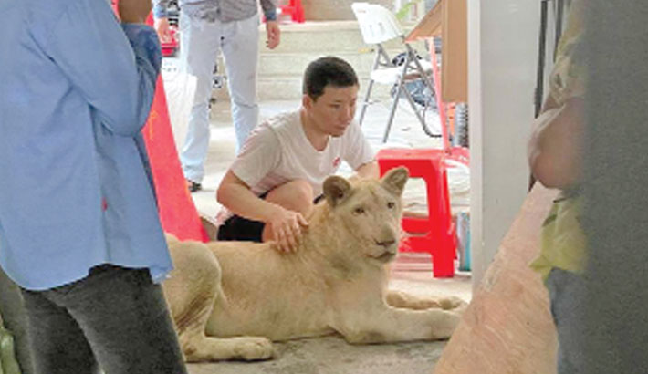 Cambodian PM orders lion returned to owner