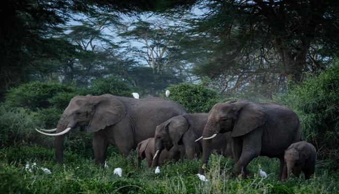 Dumbo jet: UK elephants head to the wild in Kenya