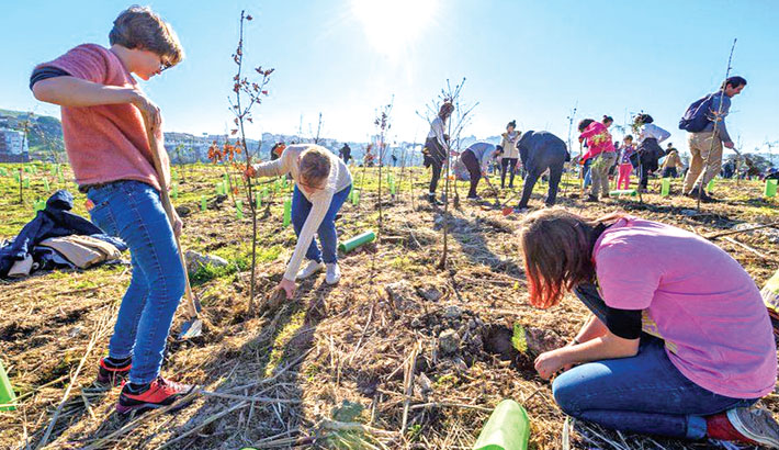 Planting extra trees will boost rainfall across Europe