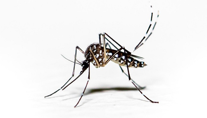 48 dengue cases reported in 24 hrs: DGHS