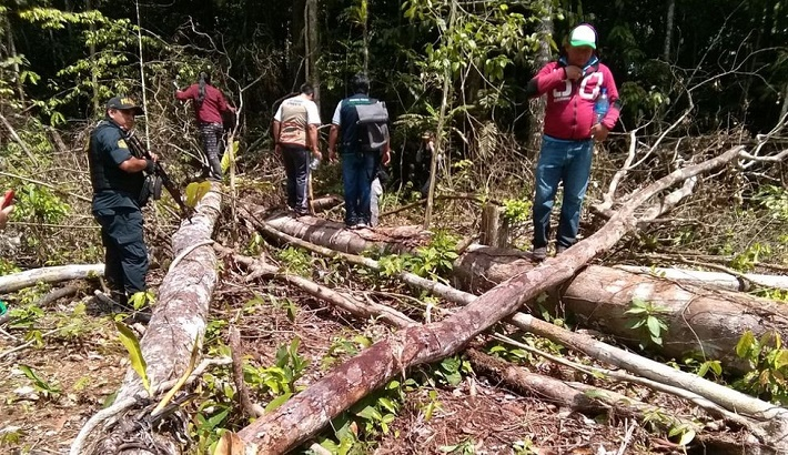 Technology boosts efforts to curb tree loss in Amazon