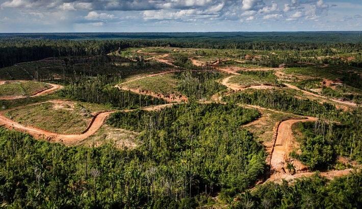 Korindo: Korean palm oil giant stripped of sustainability status