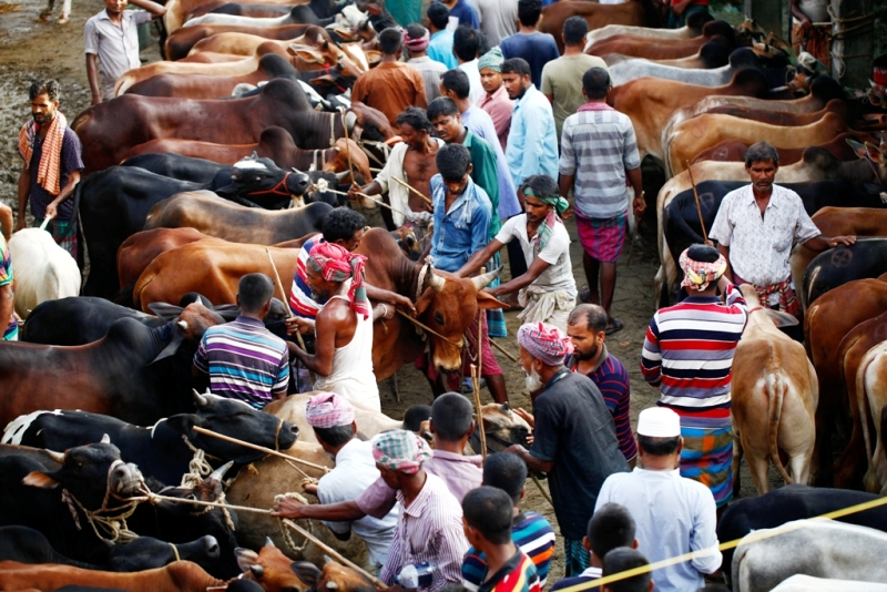 Sacrificial animals sale begins in city's cattle markets