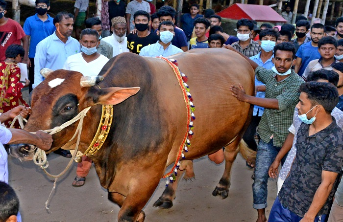 Cattle markets abuzz with buyers