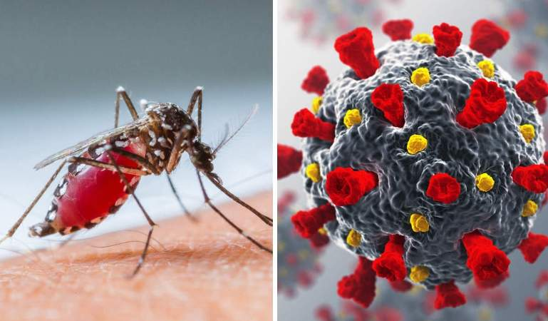 Malaria Cases on the Rise: Country braces for triple whammy