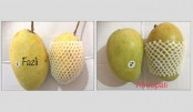 Bangladeshi mangoes enter HK market