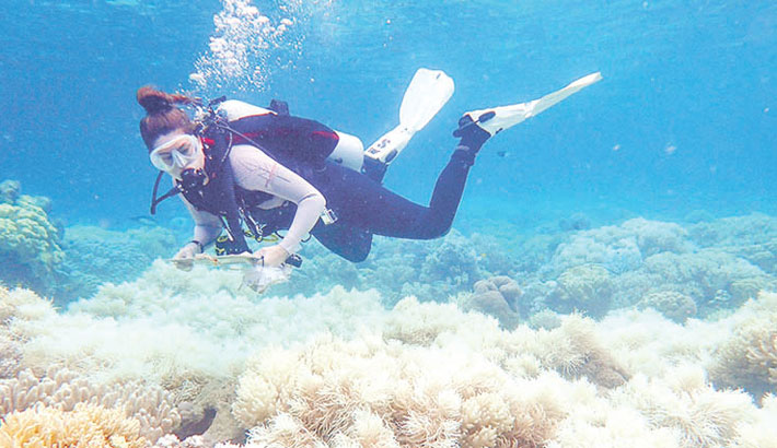 Barrier Reef outlook poor despite coral 'recovery'
