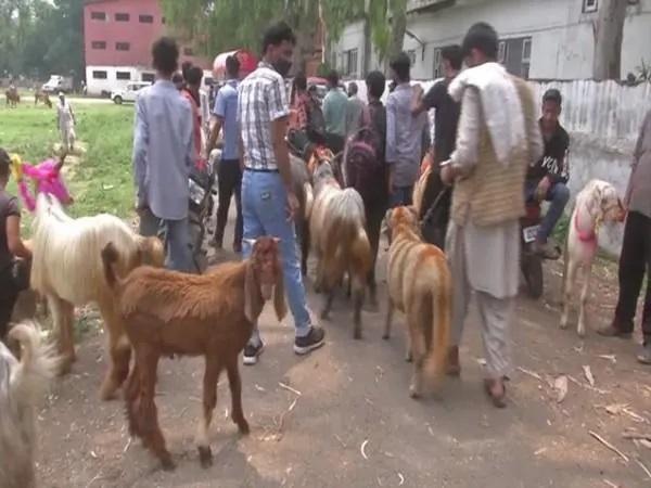 Goat market set up in J-K's Poonch ahead of Eid-ul-Azha
