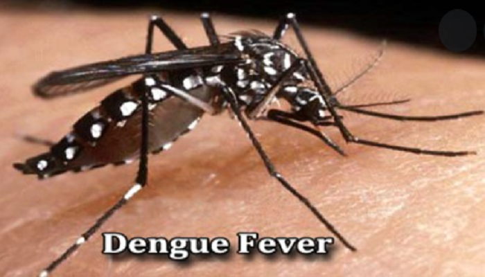 25 new dengue cases in 24 hours