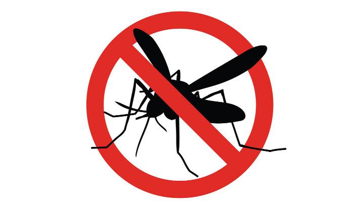Dengue cases surge