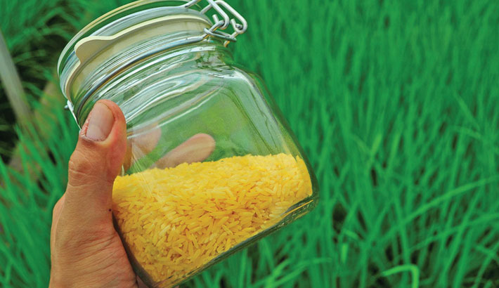 Philippines clears Golden Rice for commercial use