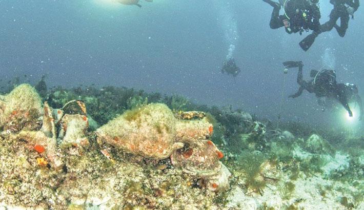 Greece's underwater museum opens ancient world