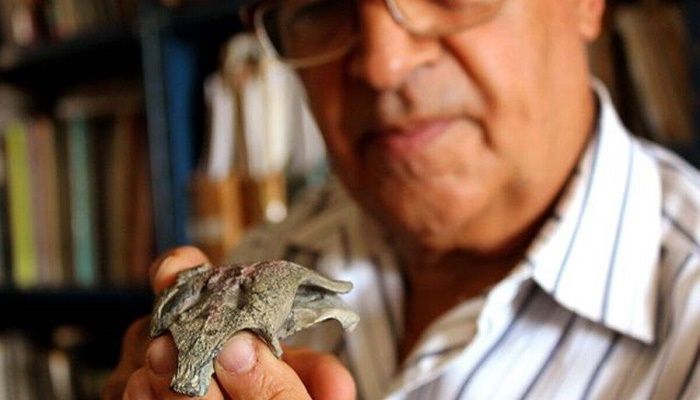 Chile crocodile fossil: Modern crocodile's 'grandfather' discovered