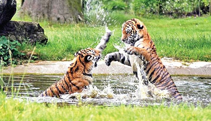Wildlife Protection a Low Priority
