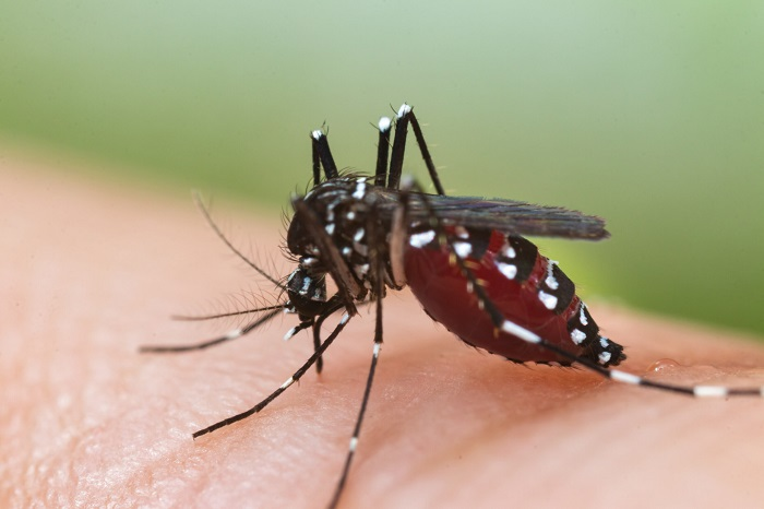 Country sees record number of dengue infection in a day