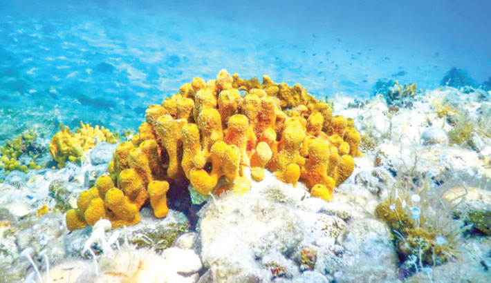 Sponge structures may be Earth's oldest animal life