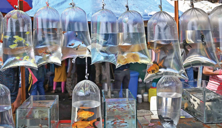 Fish for sale are kept in plastic bags filled with water at a weekly pet market in Kolkata on Sunday.