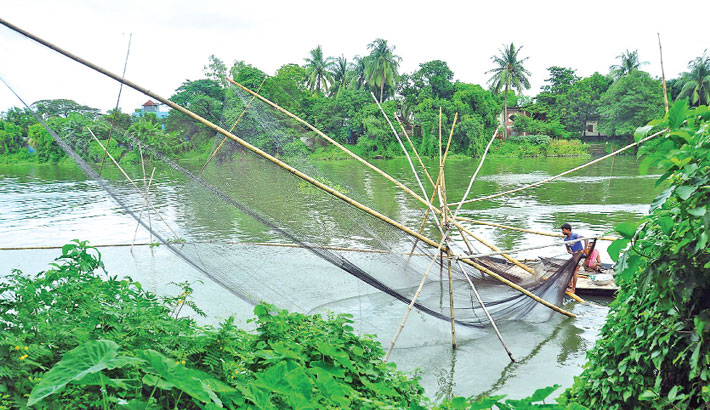 Fisherman is catching fish with a large lift net (locally known as veshal jal) in the Balu river in Rupganj Upazila of Narayanganj district. The photo was taken on Tuesday.– PBA Photo