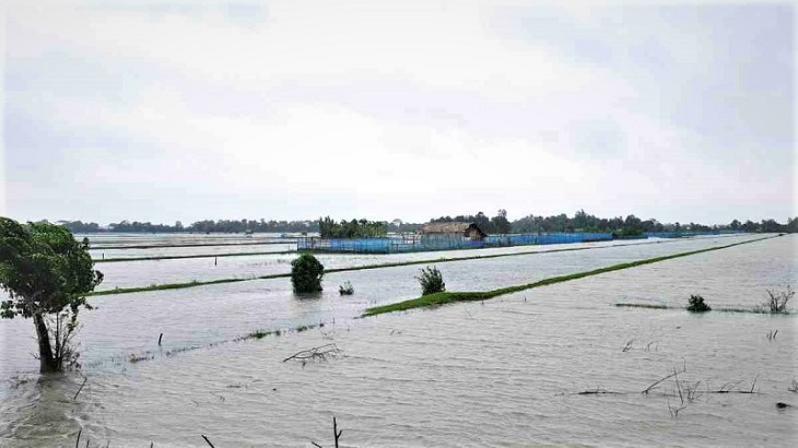 Lashed by non-stop rain, Bagerhat's 'White Gold' industry stands on the brink