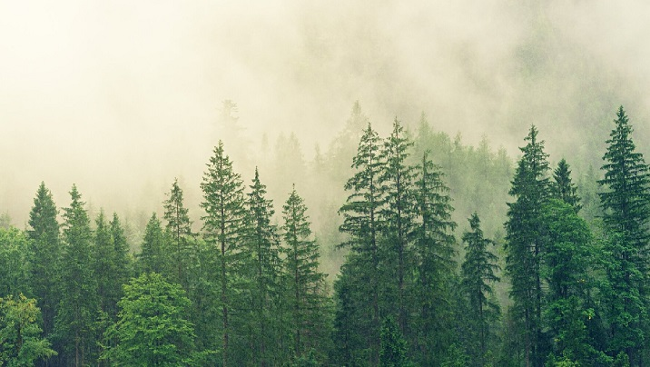 Satellites reveal how forests increase cloud, cool climate