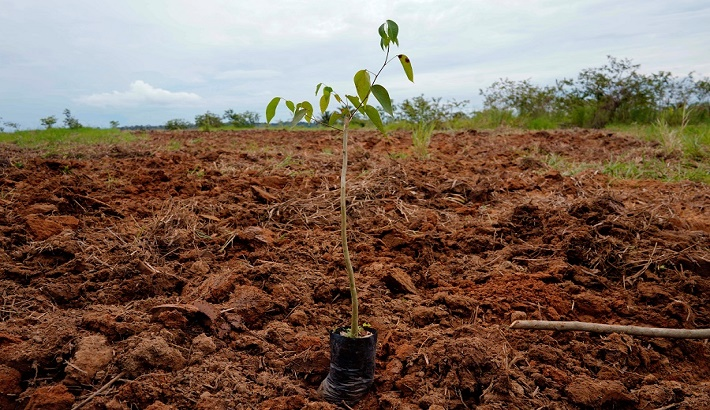 India adds 3 million hectares of forest area to achieve land degradation neutrality