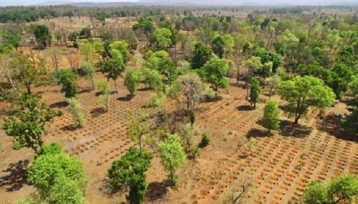 Land conservation: India's new mantra for global ecosystem restoration