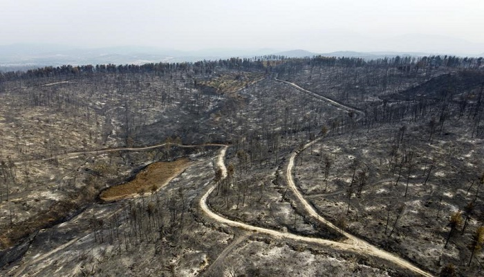 Greek wildfires a major ecological catastrophe