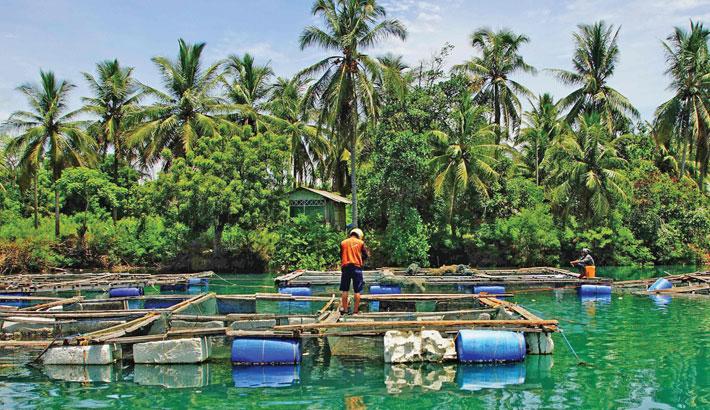A farmer tends to a fish farm along the coast in Lhokseumawe, Aceh on Thursday.