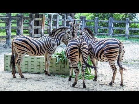 National Zoo at Mirpur, Rangpur Zoo open for visitors from Friday