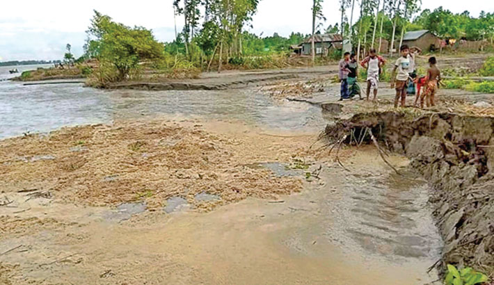 Erosion by the Jamuna river has taken a serious turn in Char Girish Union under Kazipur Upazila of Sirajganj district, devouring, croplands, houses and educational institutions. The photo was taken on Friday. – PBA Photo