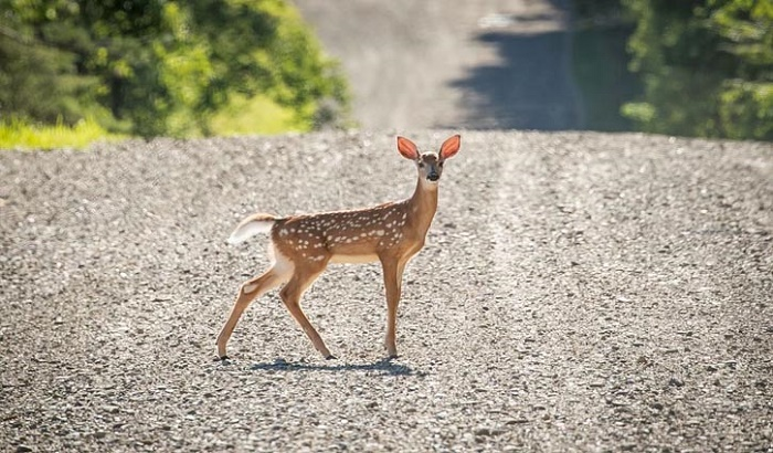US reports world's first deer infected with COVID-19