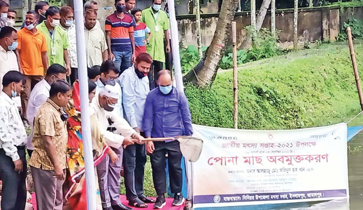 State Minister for Religious Affairs Md Faridul Haque Khan releases fish fries in Islampur upazila parishad pond in Jamalpur on Sunday, marking the 'National Fisheries Week-2021'.– SUN PHOTO
