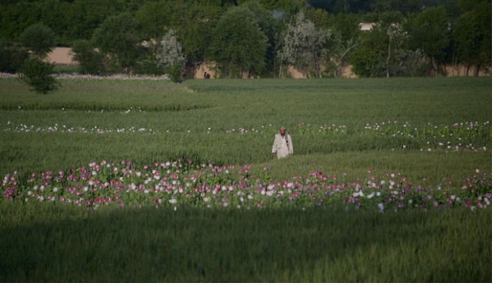 Growth of Afghan opium trade may undermine Taliban pledge to kick the habit