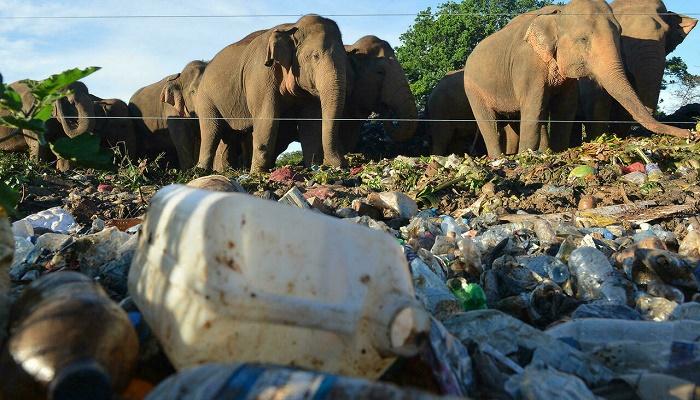 Plastic threatens migratory species in Asia-Pacific: UN