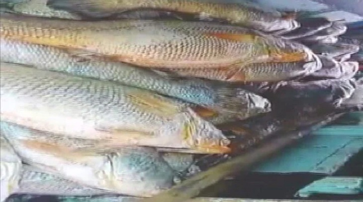 Maharashtra man nets 'fish with heart of gold', takes home over ₹ 1 crore