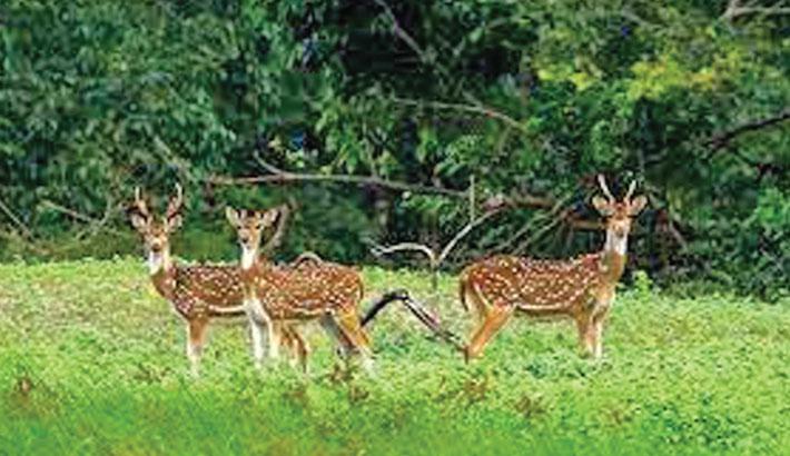 Tourists throng Sundarbans after ban withdrawal