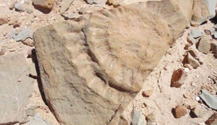 Prehistoric winged lizard unearthed in Chile