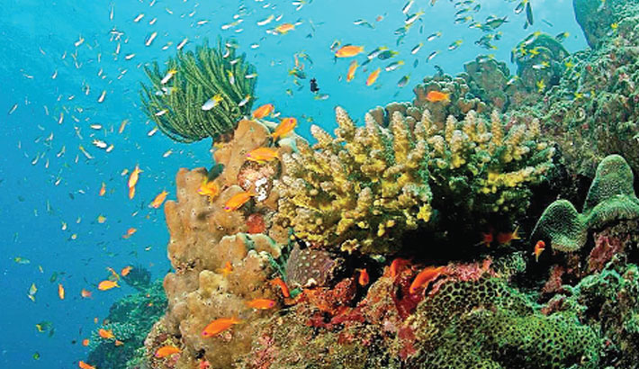Mapping the coral reefs