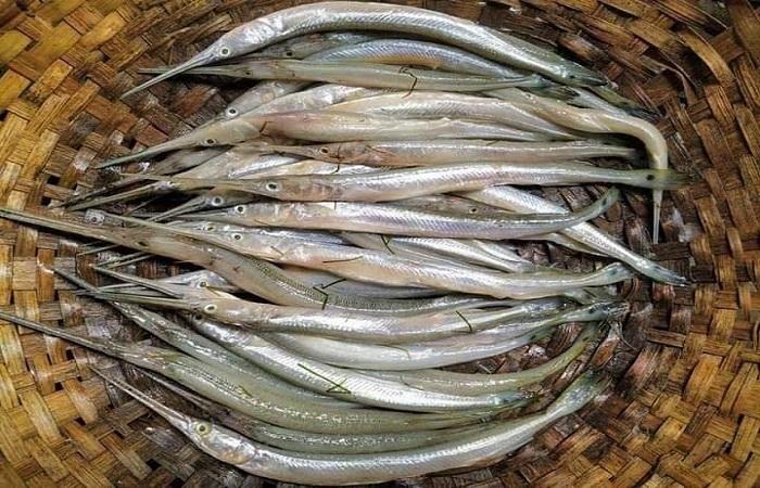 Researchers find way to save Kakila fish from extinction: BFRI