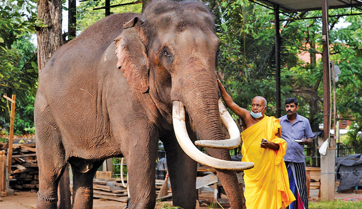 Sri Lanka returns stolen elephants to captors