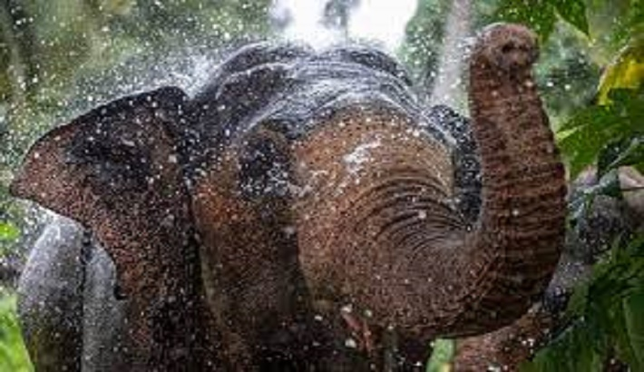 Sri Lanka conservationists fight elephant smuggling in court