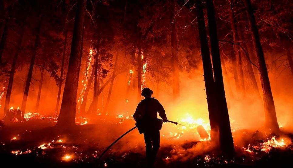 World's biggest tree gets blanket as US fire rages
