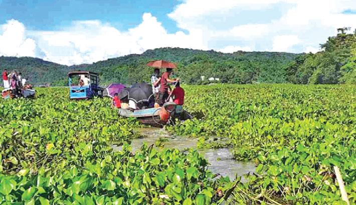 Water hyacinth spoils beauty of Kaptai Lake