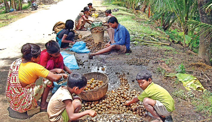 Snail catching continues unabated in Khulna