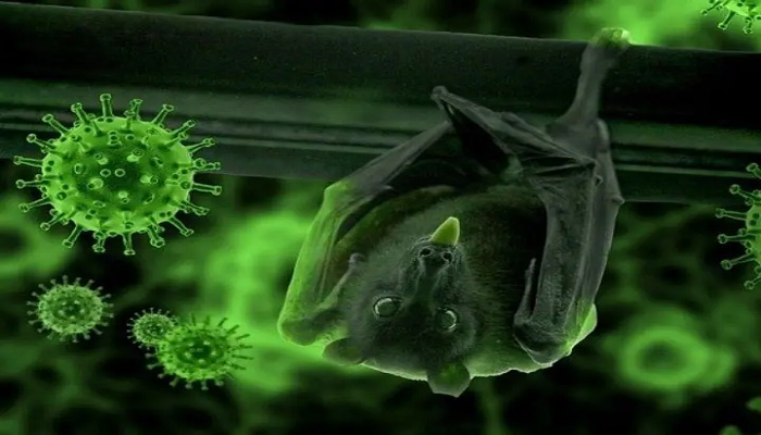 Researchers Studying Cambodia bats to track origin of Covid-19