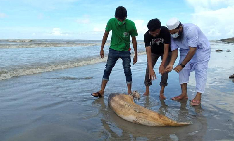 Another dead dolphin washed up on Kuakata beach