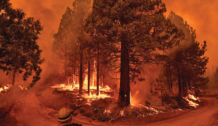 A firefighter watches flame and smoke rise into the air as trees burn during the Windy Fire in the Sequoia National Forest near Johnsondale, California on Wednesday. – AFP PHOTO
