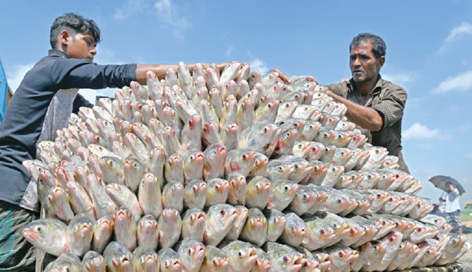 Hilsa sale gears up ahead of fishing ban