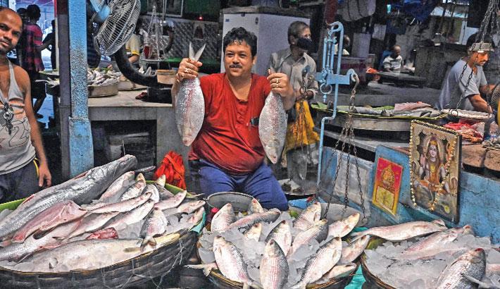 A fish vendor shows Hilsa fish imported from Bangladesh at a wholesale fish market in Kolkata on Friday, ahead of the Durga Puja festival. — AFP Photo